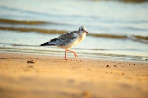 bird on a beach